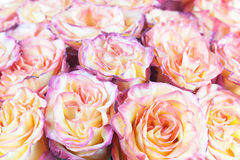 Flower bouquet from roses with retro filter effect. Royalty Free Stock Image