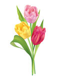 Flower bouquet. Tulips Flowers bouquet isolated on white background Royalty Free Stock Photos