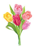 Flower bouquet. royalty free illustration