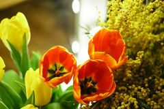 Flower bouquet. Tulips and mimosa Royalty Free Stock Photography