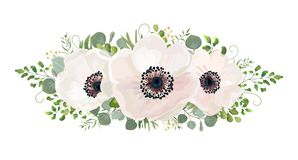 Flower Bouquet vector watercolor design element. Peach, pink whi. Te rose Anemone flower, wax eucalyptus green fern leaf, berry mix. Greeting lovely floral card Royalty Free Stock Photography