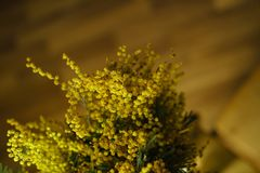 Flower bouquet. Yellow mimosa Royalty Free Stock Photos