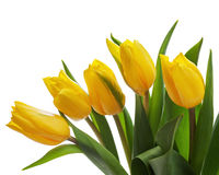 Flower bouquet from yellow tulips isolated on white background. Royalty Free Stock Photo