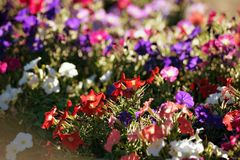 Flower bouquets , bunch of flowers Stock Photos