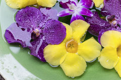 Flower in bowl with water Stock Photography