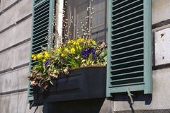 Flower box Stock Photography