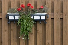 Flower Box Stock Image