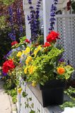 Flower box. On house porch close up Stock Photos