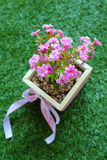 Pink little Flowers in the box wood. The flower in the box Royalty Free Stock Images