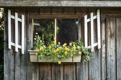 Flower box against a wood shed Stock Photo