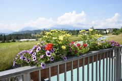 Flower-box in the Alps Royalty Free Stock Photo