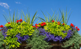 Flower box with blooming plants stock images