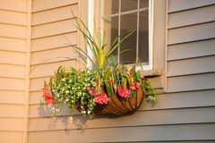 Flower Box with Coco Liner with nice arrangement infront of the Royalty Free Stock Photography