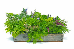 Flower box full of herbs Royalty Free Stock Photo