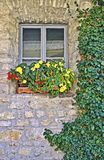 Flower Box on a Stone Wall Stock Image