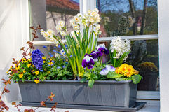 Flower box with various flowers Stock Photography