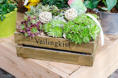 Flower box. Various garden plants in a small wooden box Royalty Free Stock Images