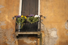 Flower box, Venice, Italy Stock Photos