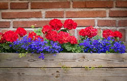 Flower box with wall in background. Sweden, Europe Stock Image