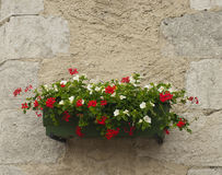 Flower box on a wall  in France Stock Photos