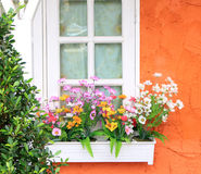 Flower box in window royalty free stock image