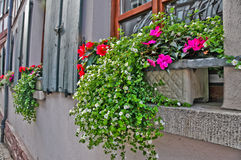 Flower Box on Window Sill in Old Europe. Flowers in boxes on window sills in Mespelbrunn, Germany Stock Image
