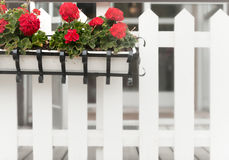 Flower box on wooden fence. Sweden, Europe Royalty Free Stock Photo