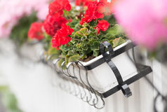 Flower box on wooden fence. Sweden, Europe Stock Photos