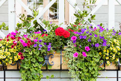 flower boxes in front of house Royalty Free Stock Images