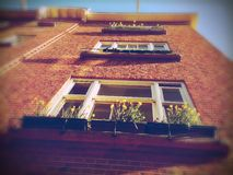 Flower boxes on house, Amsterdam, Netherlands Stock Images