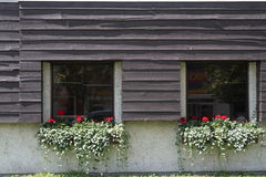 Flower boxes on window sills Stock Image