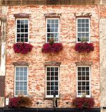 Flower Boxes in Windows Stock Photo