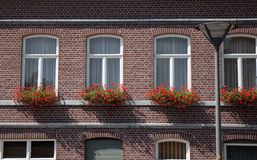 Flower boxes on windows Stock Image