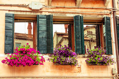 Flower boxes and windows. Venice. Royalty Free Stock Photography