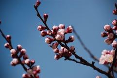 Flower branch. Spring flower branch on blue sky nature stock image