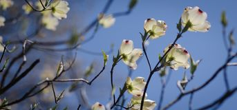 Flower, Branch, Blossom, Spring royalty free stock image