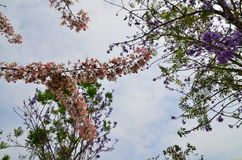 The flower. And branch with blue sky Stock Image