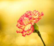 Flower on a bright background Royalty Free Stock Photography