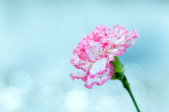 Flower on a bright background Stock Images