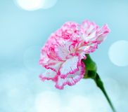 Flower on a bright background Royalty Free Stock Image