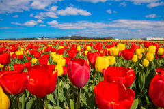 Flower bright beautiful field. Colorful flowers Stock Image