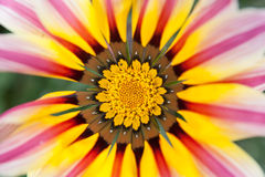 Flower bright close-up Stock Images