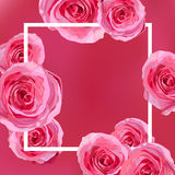 Flower bright flowers pink Rose, garden roses beautiful lovely s Royalty Free Stock Image
