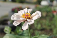 Flower in bright sun light royalty free stock photography