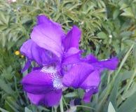 Flower. Stock Image