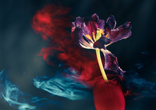 Flower bud at abstract background Stock Image