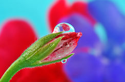 Flower bud and beautiful rain drop Royalty Free Stock Photo