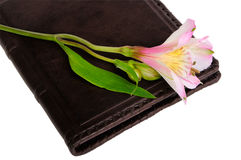 Flower bud on a book Stock Photo