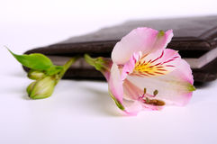 Flower bud in a book Royalty Free Stock Photography