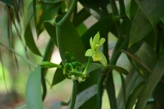 Flower Bud Sprouting in Early Spring Stock Image